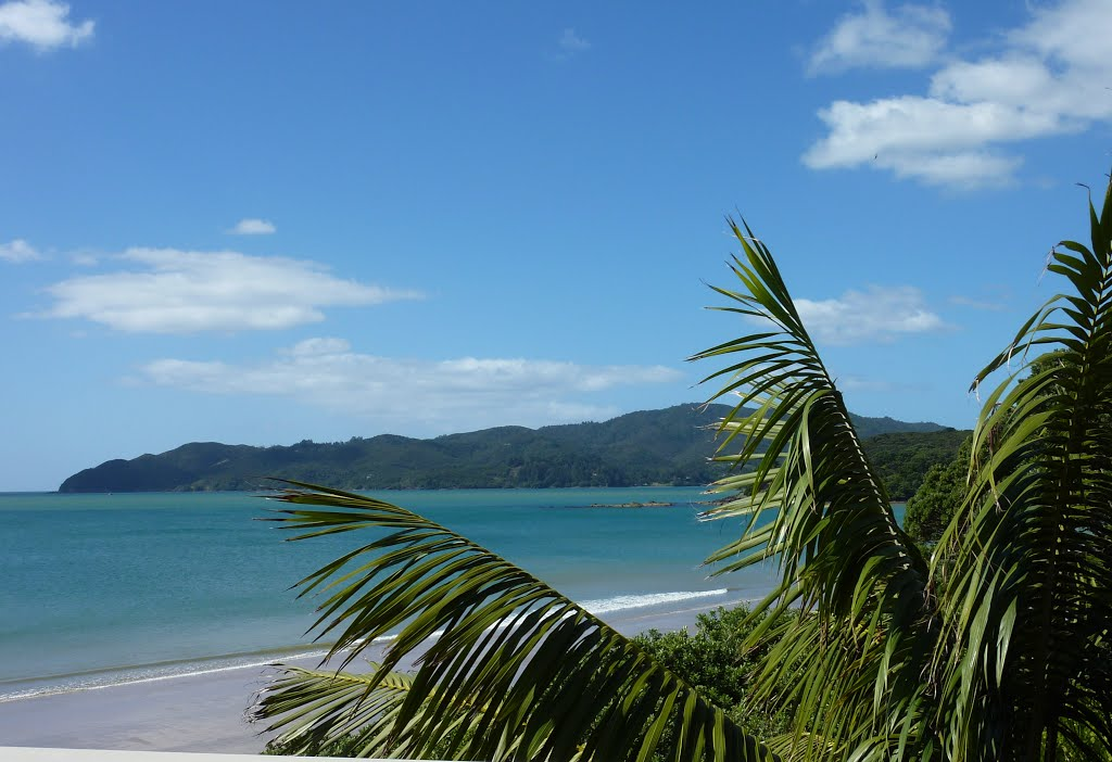 A view of Coopers Beach, with palm trees in the foreground