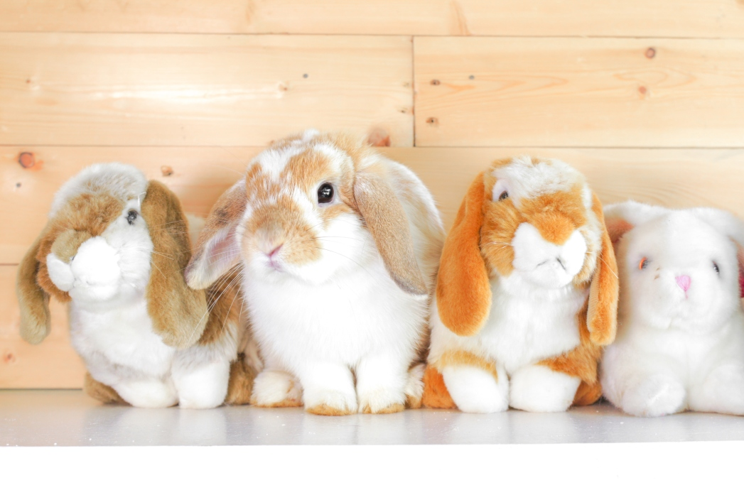 One real bunny in a row of stuffed toys