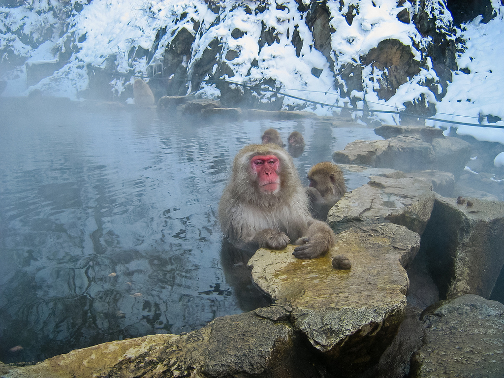 A red-faced Japanese snow monkey looks meditative as it bathes in the hot springs.