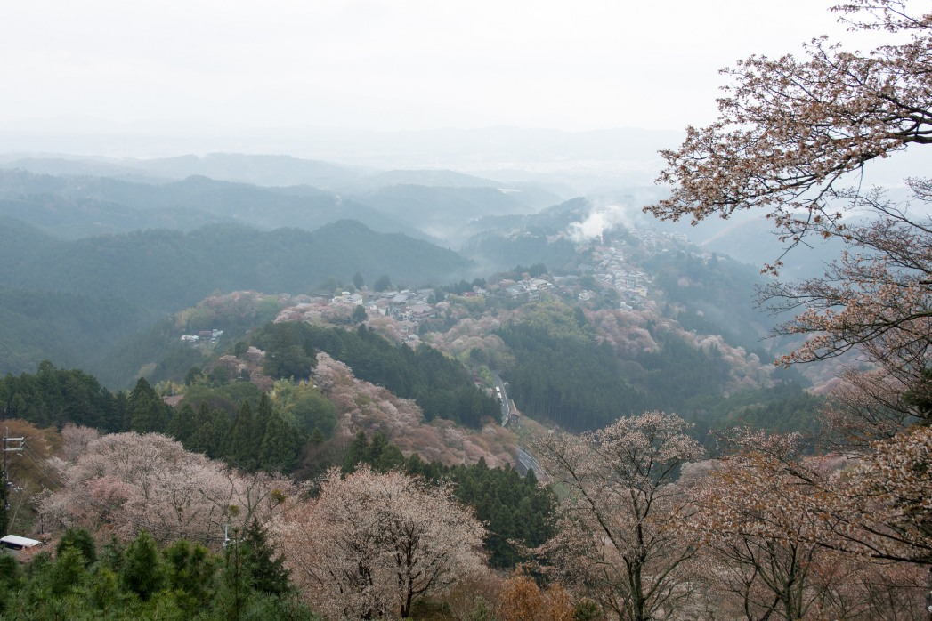 A great view from Mount Yoshino looking out on the valley with the cherry blossoms flowering